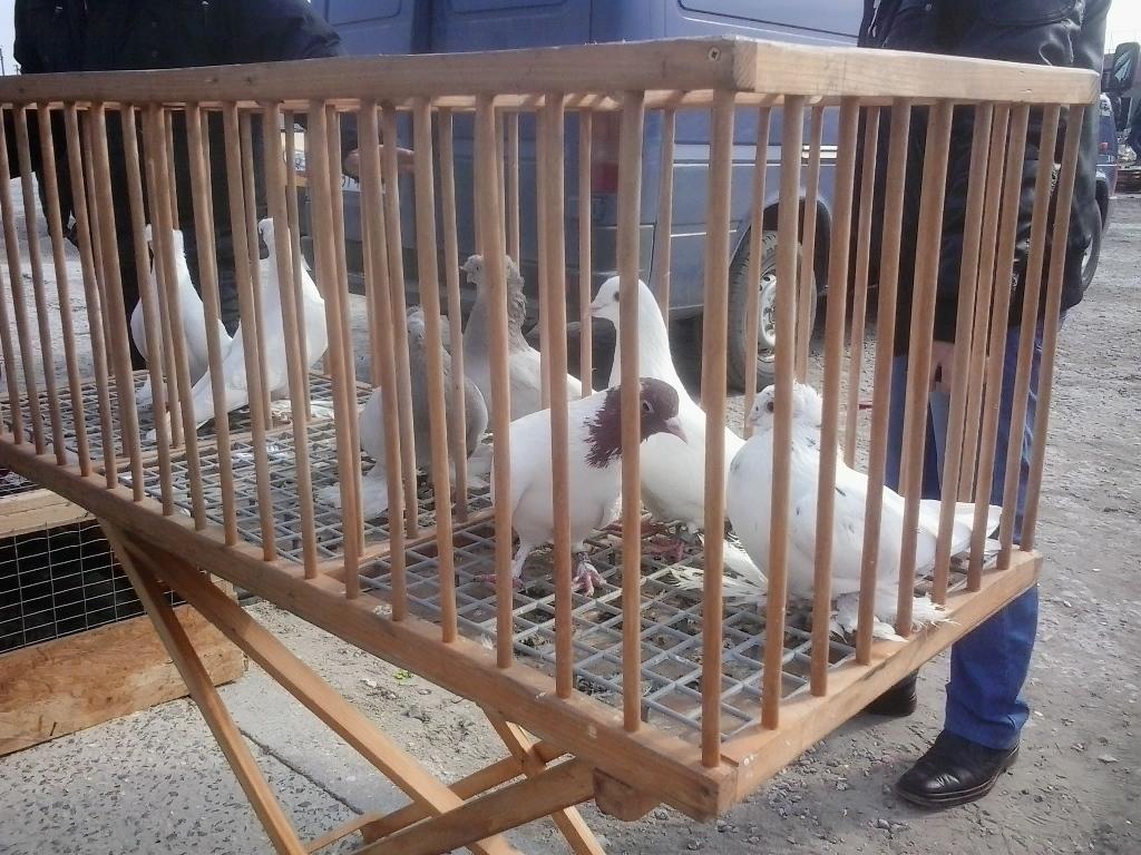 Выставка голубей в Херсонской области