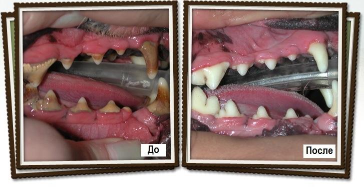 Зубной камень у собак удаление в домашних