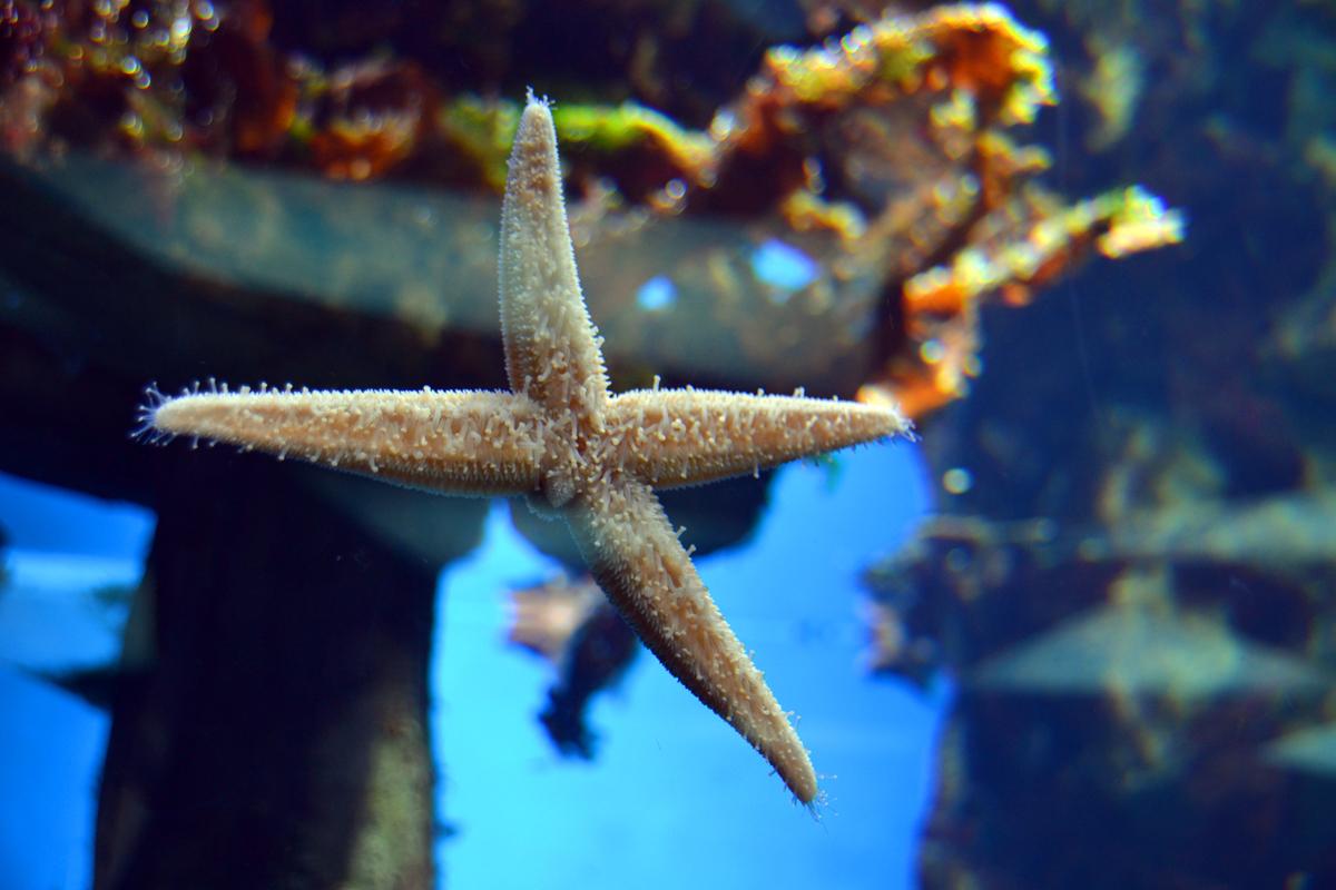 3. Большие морские звёзды, виден каждый волосок))))