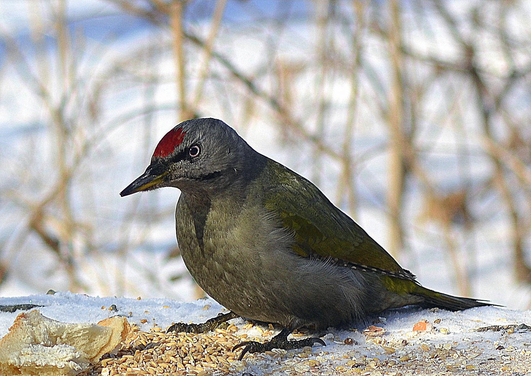 птицы перми название и фото фото